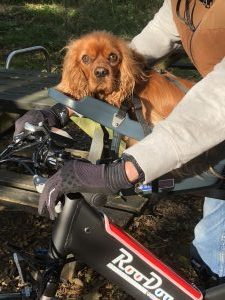 accessories for RooDog ebikes the Buddy Rider