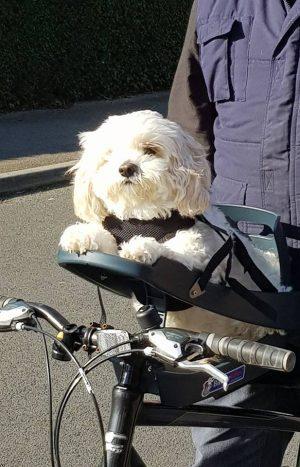 RooDog customer - buddy rider